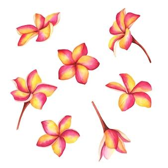 Flores de plumeria de vetor ilustração desenhada à mão de ramos exóticos tropicais isolados no branco