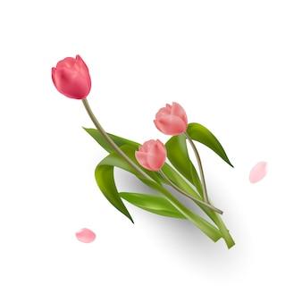 Flores de tulipa em fundo branco. isolado.