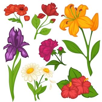 Flores desabrocham vector conjunto de ícones isolados plana