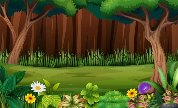 Flores e árvores na floresta