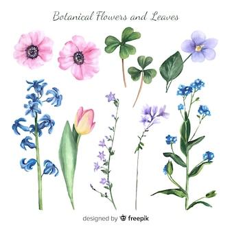 Flores e folhas botânicas em aquarela