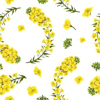 Flores e folhas de colza de padrão, canola.