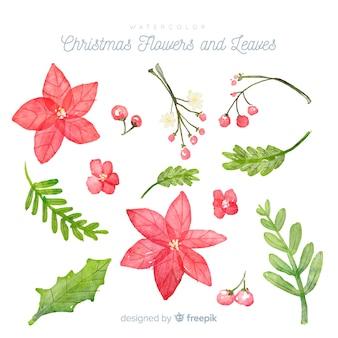 Flores e folhas de natal em aquarela
