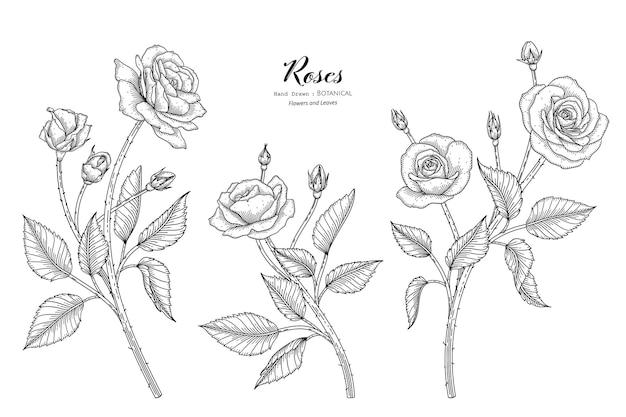 Flores e folhas de rosas desenham a ilustração botânica com arte de linha.