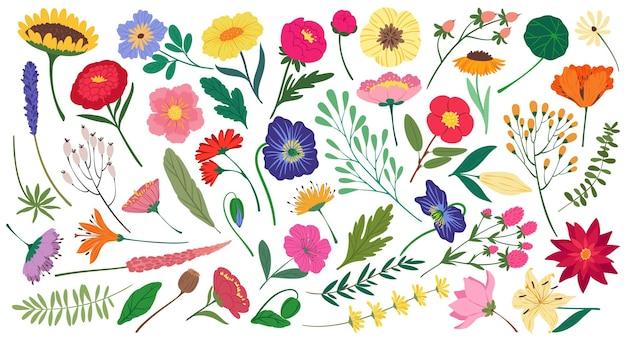 Flores e folhas fofas da primavera, elementos florais botânicos, desenhos animados planos de flores silvestres, conjunto de vetores