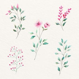 Flores e folhas naturais em aquarela