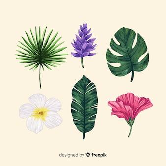 Flores e folhas tropicais de mão desenhada