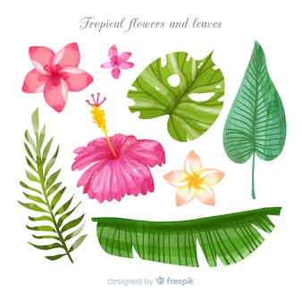 Flores e folhas tropicais em aquarela