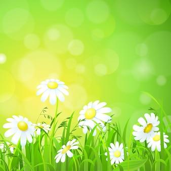 Flores e grama no campo