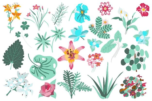 Flores e plantas isoladas conjunto lírios folhas verdes aloe florescendo flores silvestres jardim florido