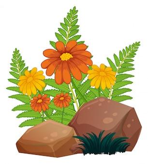 Flores e samambaias