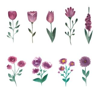 Flores em aquarela. coleção de botânica em fundo branco
