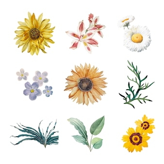 Flores em flor