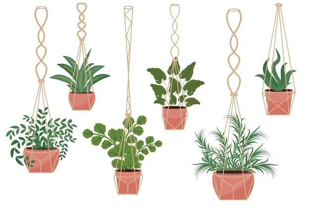 Flores em vaso em vasos de macramê, estilo escandinavo moderno, decoração de interiores. conjunto de plantas suspensas. ilustração.