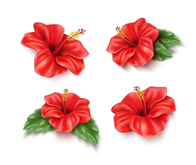 Flores exóticas de hibisco vermelho realista