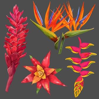 Flores exóticas e conjunto de folhas. elementos florais tropicais para decoração