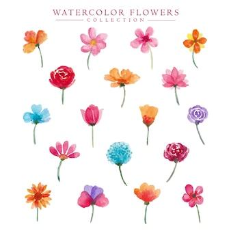 Flores florais em aquarela