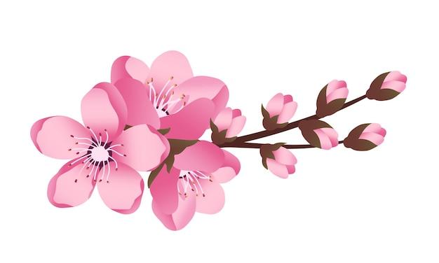 Flores fofas de sakura