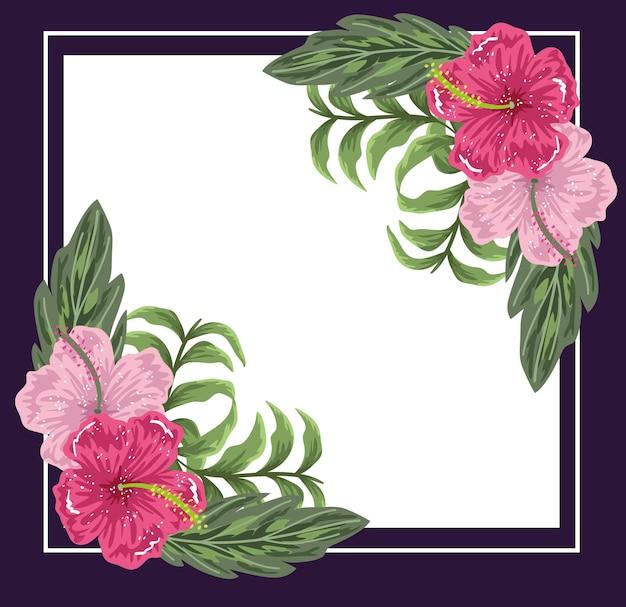 Flores, hibiscos, folhas florais, natureza, quadro roxo, ilustração, pintura