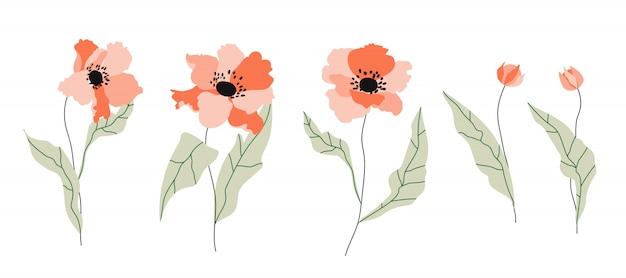 Flores isoladas de papoula. flores desenhadas à mão modernas em branco. ilustração na moda para web, design de logotipo e impressão. lindas flores de laranja com pequenas folhas verdes suaves.