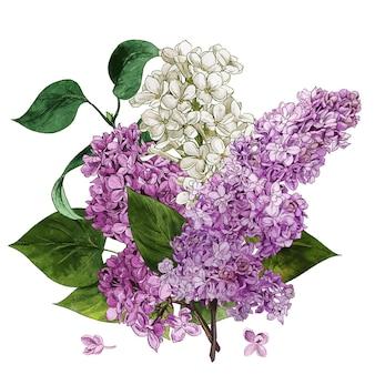 Flores lilás em aquarela e buquê lilás de folhas