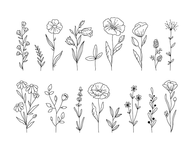Flores silvestres clipart preto e branco pacote papoula flor margarida camomila elementos florais botânicos