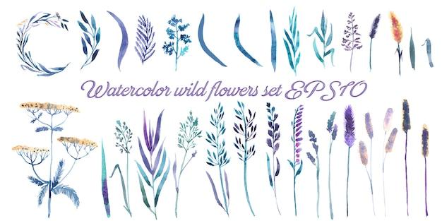 Flores silvestres, conjunto de ervas Vetor Premium