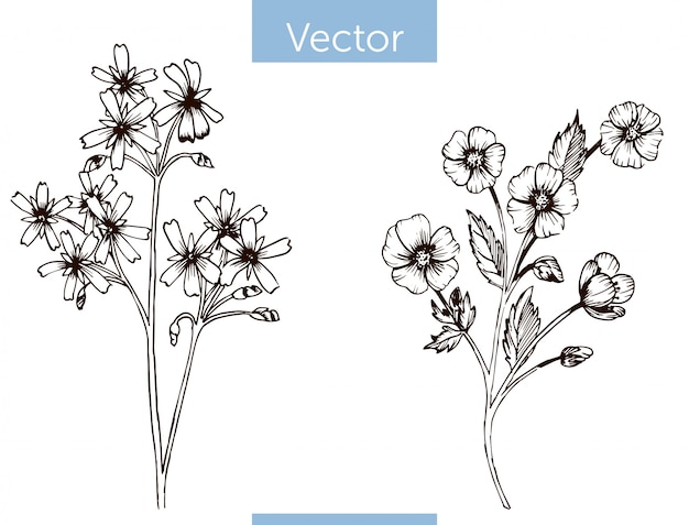 Flores silvestres de vetor monocromático mão desenhada no fundo branco
