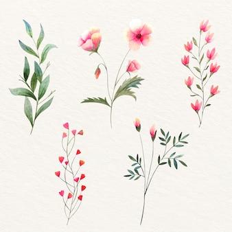 Flores silvestres em aquarela coloridas