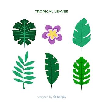 Flores tropicais desenhadas a mão e pacote de folhas