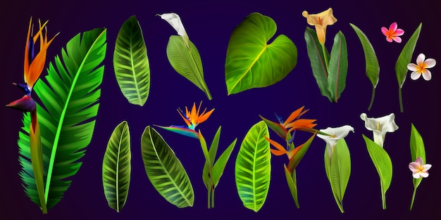 Flores tropicais do vetor. cartão com ilustração floral. buquê de flores com folhas exóticas isoladas