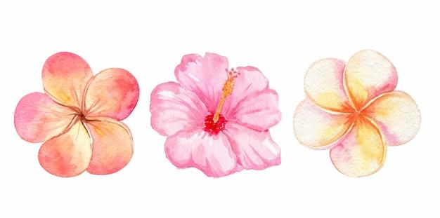 Flores tropicais em aquarela laranja e rosa isoladas