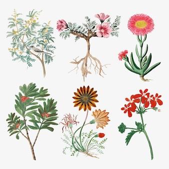 Flores vetoriais ilustração da natureza vintage, remixada das obras de arte de robert jacob gordon