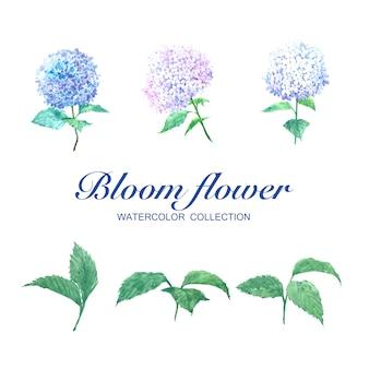 Floresça a hortênsia e as folhas da aquarela da flor no branco para o uso decorativo.