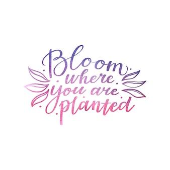 Floresça onde estiver plantado