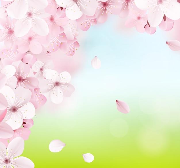 Florescendo luz rosa sakura flores
