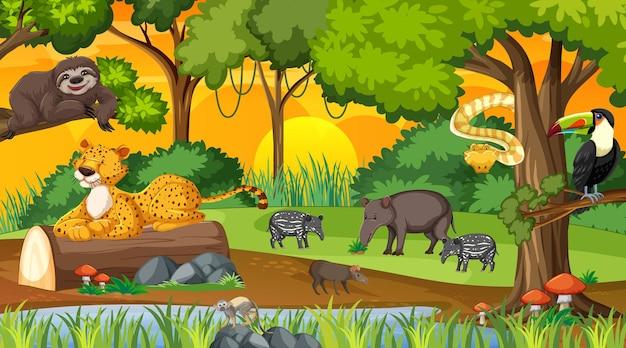 Floresta ao pôr do sol, cena da paisagem com diferentes animais selvagens