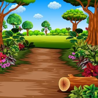 Floresta com trilha