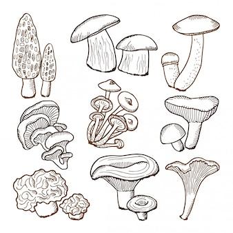 Floresta de cogumelos na mão desenhada estilo.