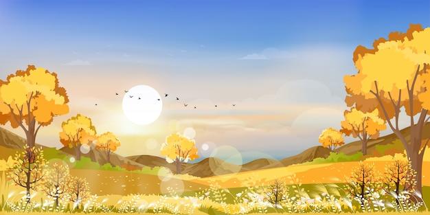 Floresta do país das maravilhas da paisagem do outono com grama. temporada de outono com bela vista panorâmica com pôr do sol