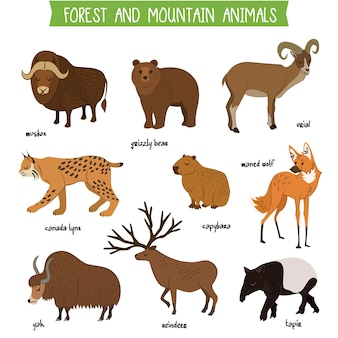 Floresta e montanha animais isolados vector set