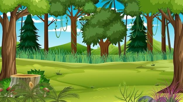 Floresta em cena diurna com várias plantas e árvores florestais