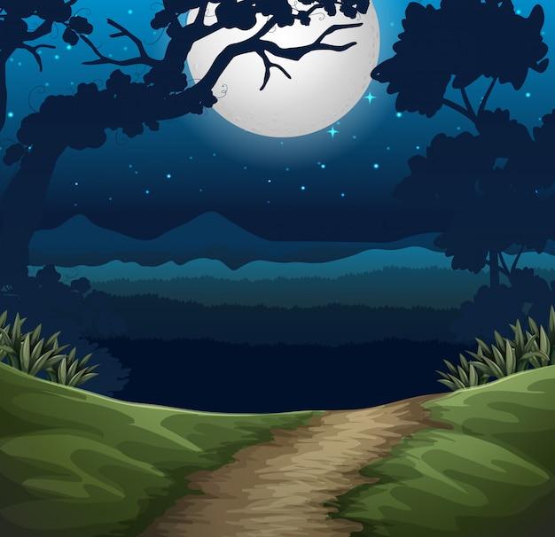Floresta em cena noturna