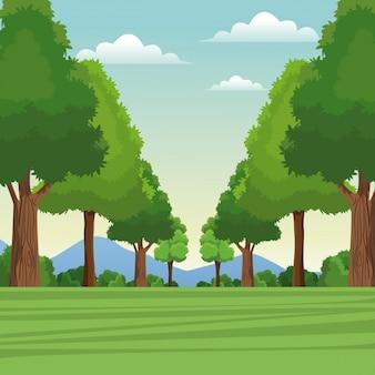 Floresta floresta natural céu prado montanha