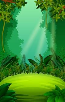 Floresta limpa e verde