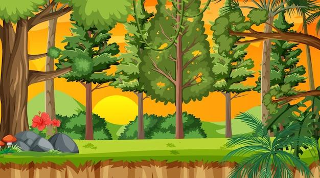 Floresta natural na cena do pôr do sol