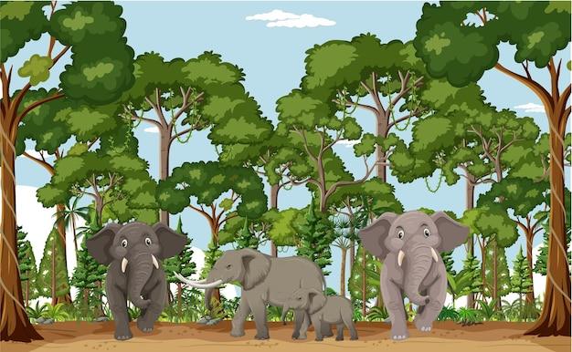 Floresta ou cena de floresta tropical com a família do tigre