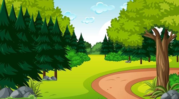 Floresta vazia em cena diurna com várias árvores florestais