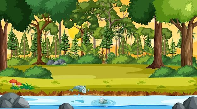Fluxo do rio pela cena da floresta na hora do pôr do sol