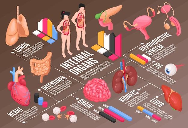 Fluxograma da anatomia humana com pulmões, cérebro e olhos isométricos